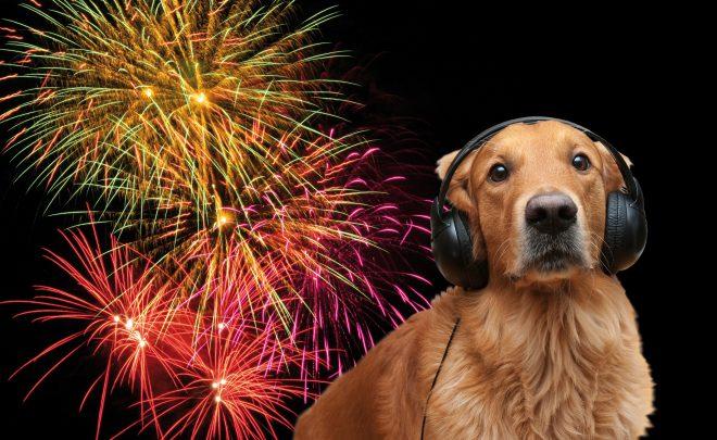 Feuerwerk_mit_Hund18x13